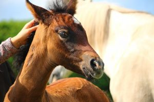 Preventing Horse Rabies