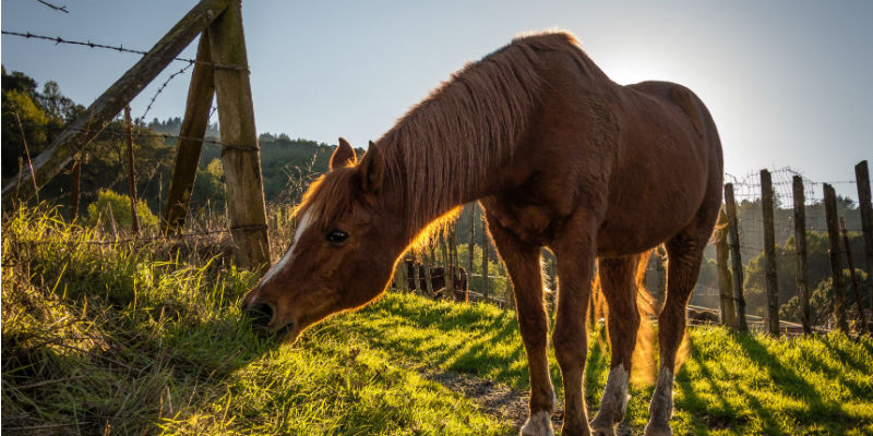Equine Poison Prevention