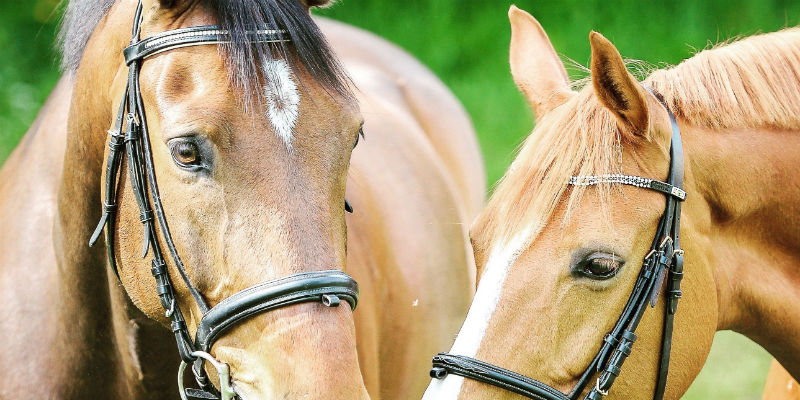 Caring For Your Horse Tack