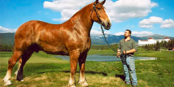 draft horse myths